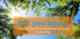 free tree program in houston, arbor tree program
